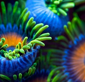 the colors of the reef