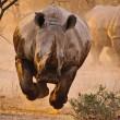 frightening and beautiful charging rhino
