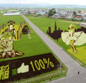 rice field art, japan