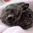 baby bunny in wildlife rehab center