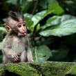 baby monkey is teasing you