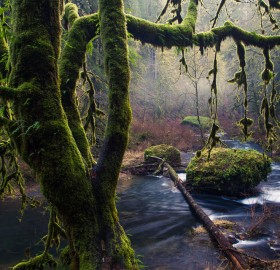 green swamp, oregon