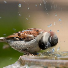 photo of sparrow taken at the right moment
