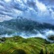 rice terraces, gaungxi province, china
