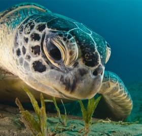 sea turtle close-up