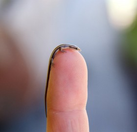 tiny skink lizard