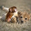 baby lion and a baby monkey snuggle