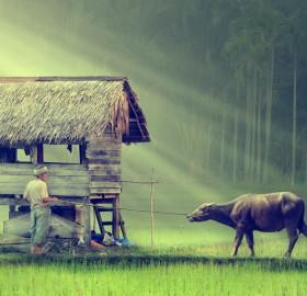 farmer in indonesian village