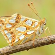 gracious yellow butterfly
