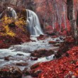 inside forest of grand canyon of crimea