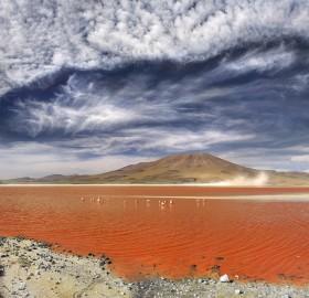 laguna colorada, salt lake, bolivia