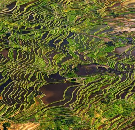 rice field terrace, china