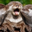 three adorable otters
