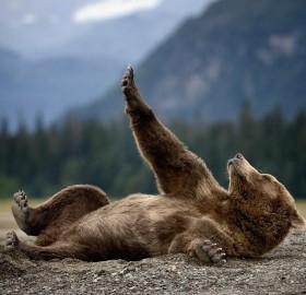 bear enjoying his nails