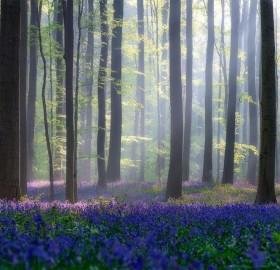 magical forest, belgium