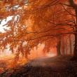 white carpathians in autumn