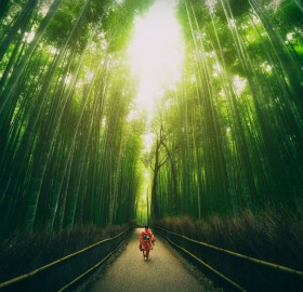 bamboo groves of arashiyama, japan