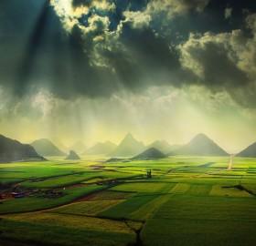 canola fields, china