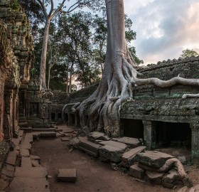tree on the stone, ta prohm temple, cambodia