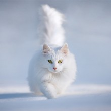white cat in the snow