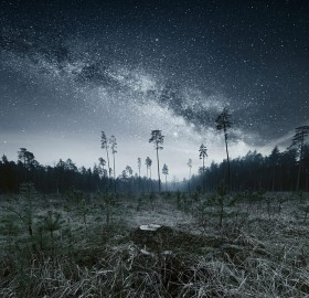forest walk under milky way