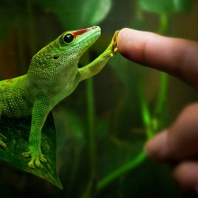 friendship with gecko