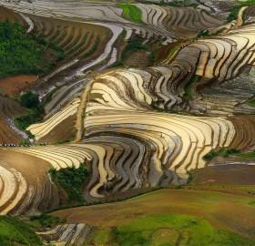 shiny rice terraces, vietnam