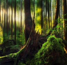 the forests of ecola state park, oregon