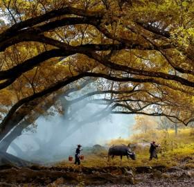 autumn morning, indonesia