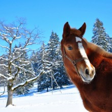beautiful horse in winter