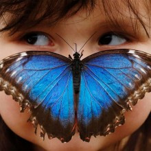 blue morpho butterfly and a three-Year-Old girl