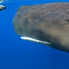 face to face with whale