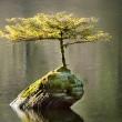 tree growing on a log