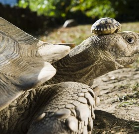 140 year old turtle mom with her 5 day old son
