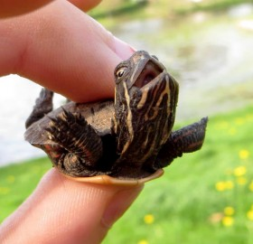 happy little turtle
