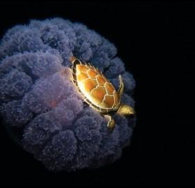 sea turtle riding a jellyfish