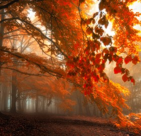 white carpathians forest, czech republic