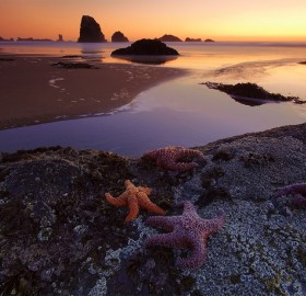 stars of indian beach, oregon