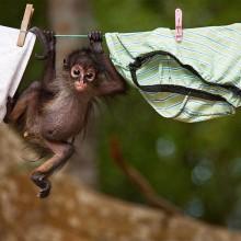baby monkey on washing line
