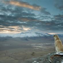 dog watches over himalaya