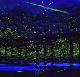 fireflies over river, japan