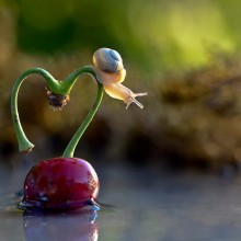 romantic snail
