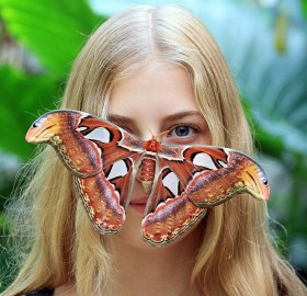 attacus atlas butterfly rests on a girl's face