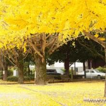 autumn leaves in fukuoka, japan