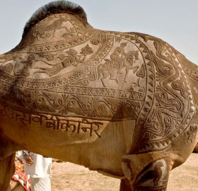 beautiful camel haircut