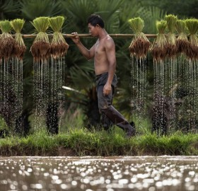 farmer in thailand