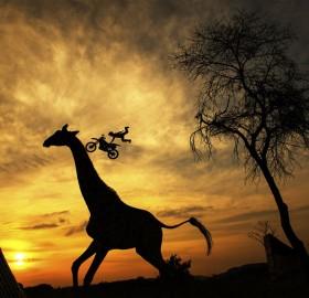 motocross at south african savanna