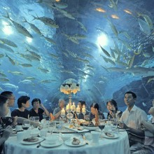 restaurant under aquarium