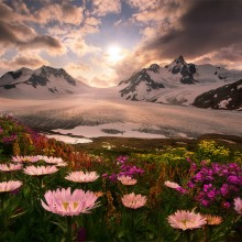 blooming flowers below mountains, alaska