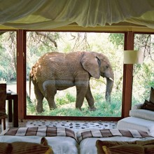 room with a view, nakanyane safari lodge, south africa